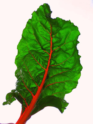 Stuffed Swiss Chard Leaves