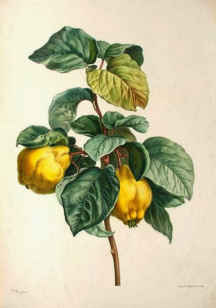 Quince Paste And Jelly